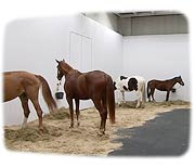 Homage to Jannis Kounellis / Untitled (12 Horses)